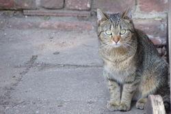 Eine unserer Hofkatzen.