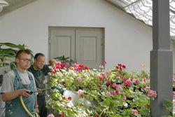 Pflanzenanzucht in der Schloßgärtnerei Branitz.